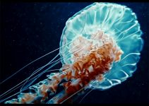 """The Power of Magic Lantern Raw in Stunning """"Endless Gravity"""" Short Piece Shot on a Canon 6D"""
